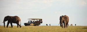 Elephant Pepper Camp Mara - Cheetah Revolution Safaris