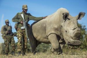 Sudan, More than a Rhino - Cheetah Safaris Kenya