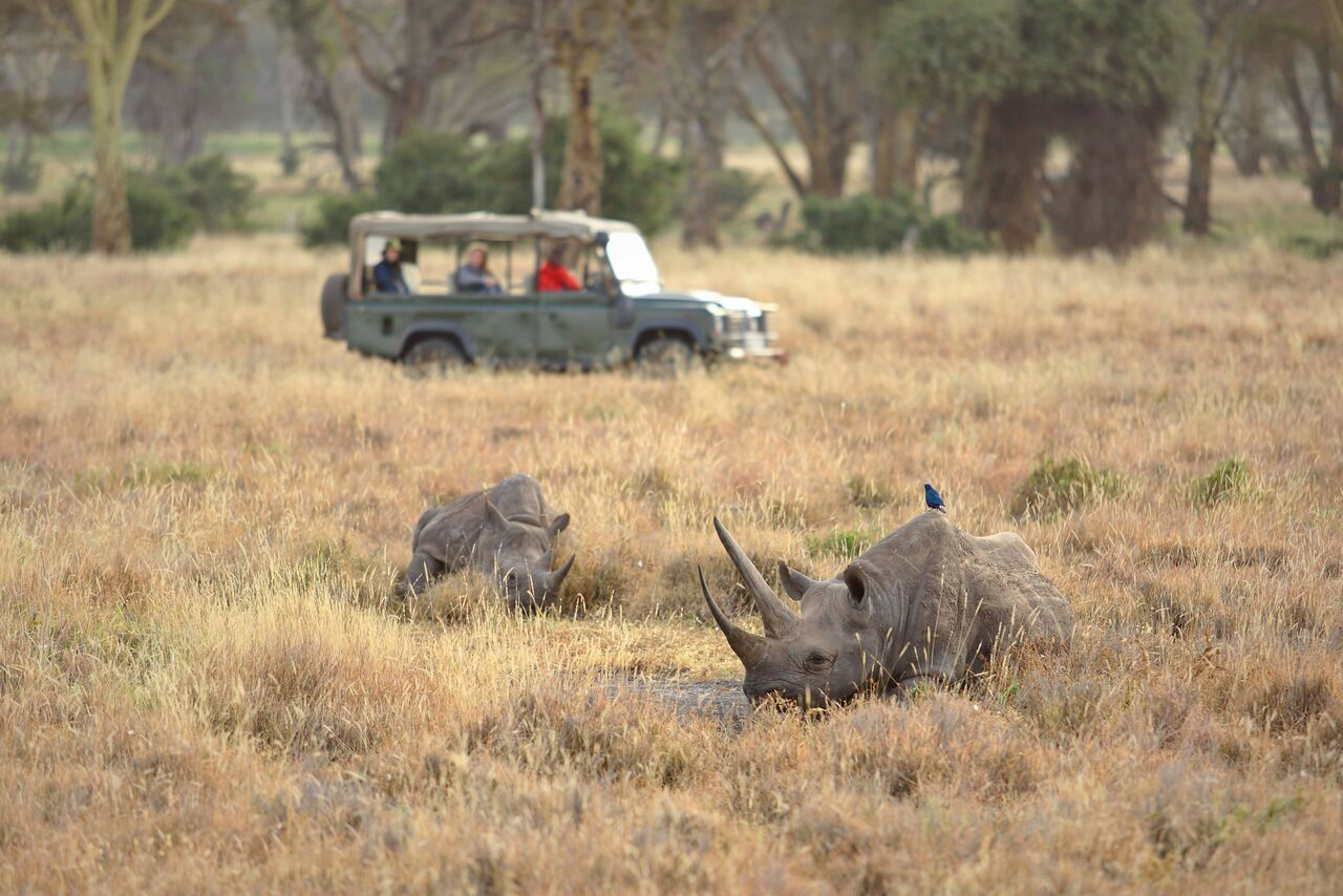 Elewana Kifaru House Lewa - wildlife & activities - game drive & white rhino-5_preview