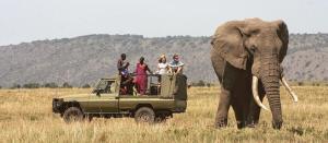 Meru National Park Game drive in a Land cruiser Jeep - Cheetah Revolution Safaris