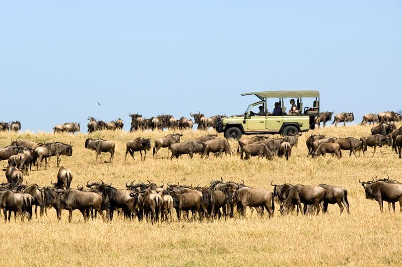 Migration Safari