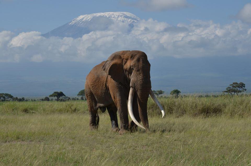 Photography Safaris in Kenya
