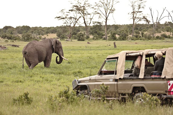 elephant game drive in Kenya