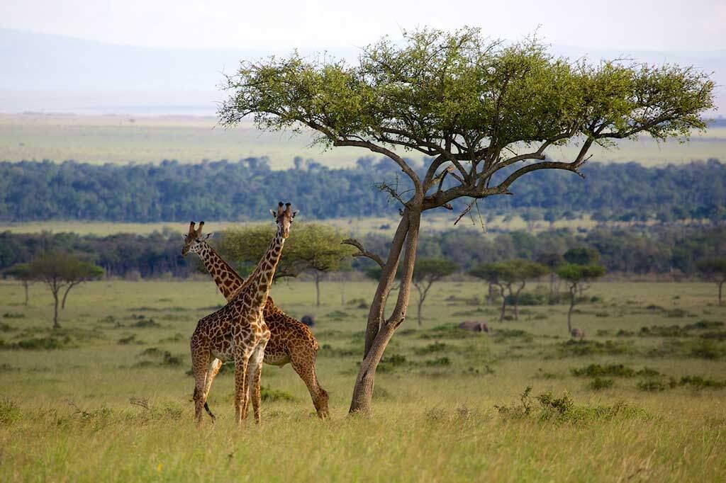 Maasai Mara National Reserve in Kenya