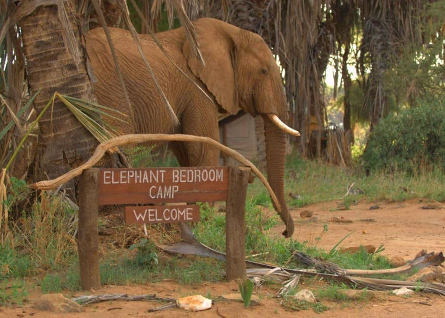 Elephant Bedroom