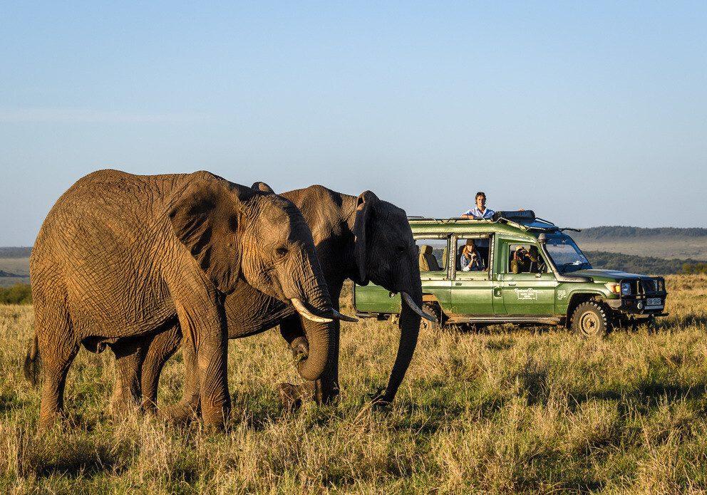 Elephant next to a car