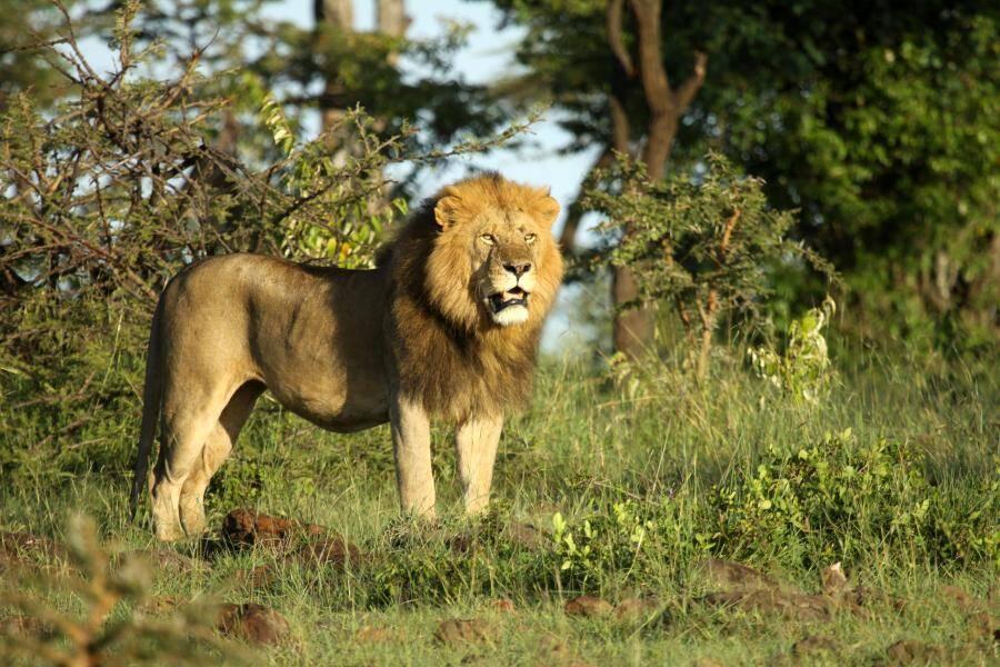 Olare Motorogi Conservancy - Masai Mara - Cheetah Safaris