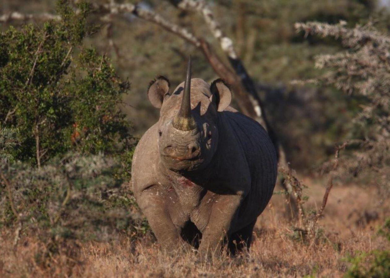 Ol Pejeta Conservancy - Nanyuki - Cheetah Safaris