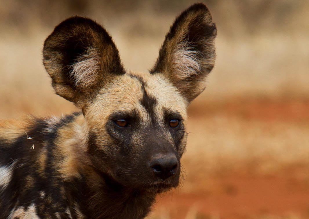 The Sanctuary at Ol Lentile - Laikipia - Cheetah Safaris