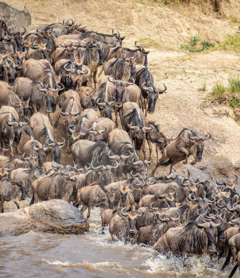 Wildebeest Safaris - Cheetah Safaris