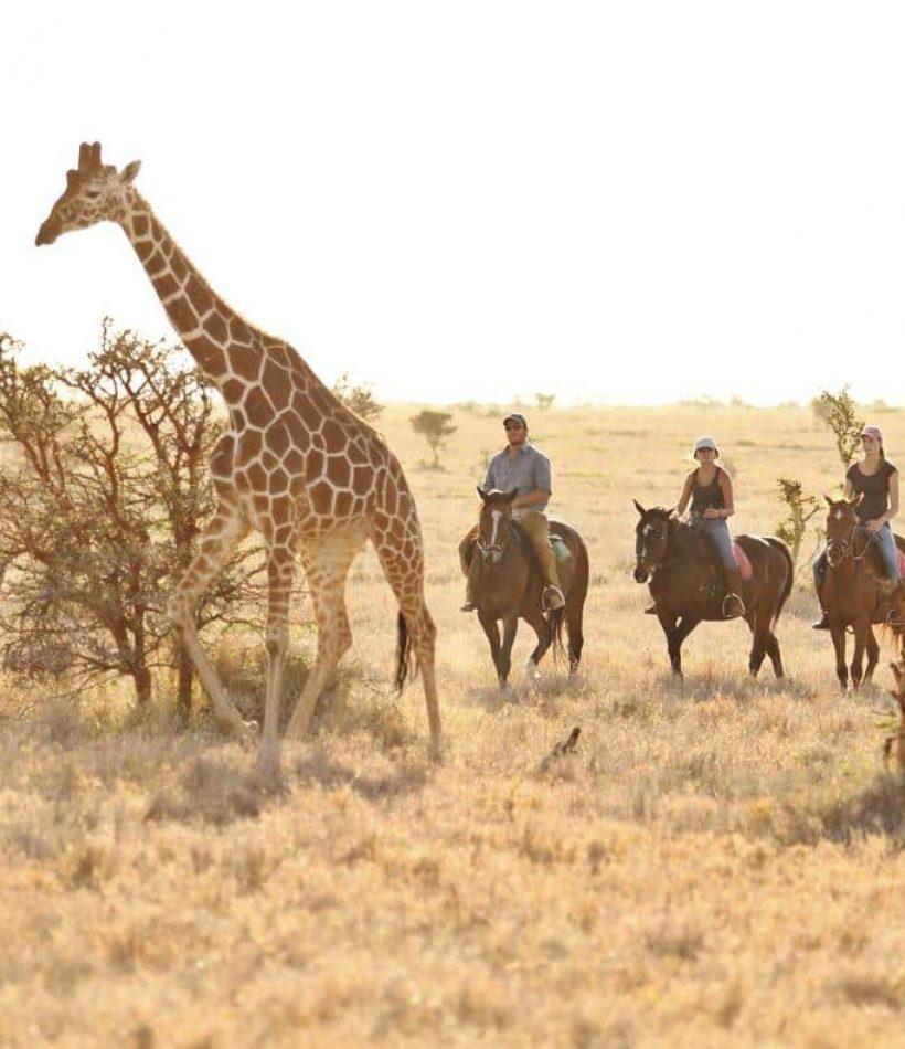 Lewa Wildlife Conservancy - Cheetah Safaris