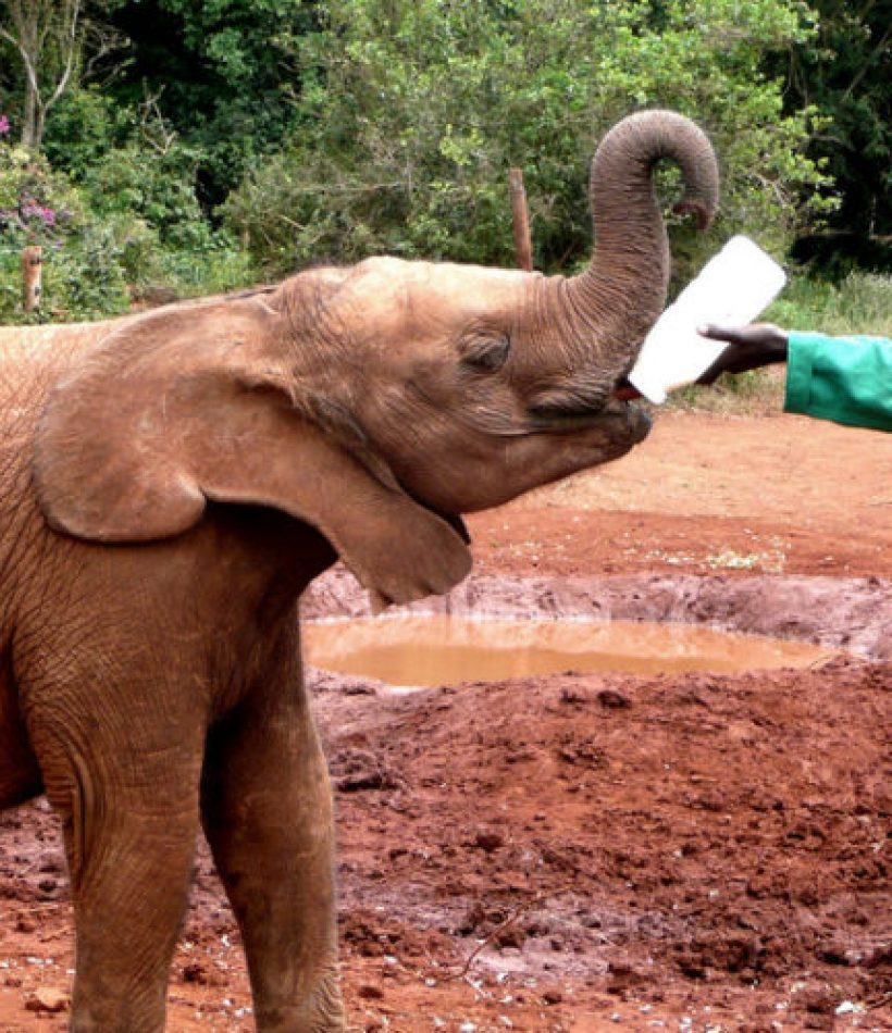 Nairobi_David-Sheldrick-Elephant-Ophanage-960x500