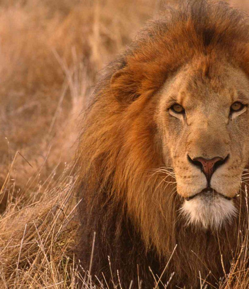 Ngorongoro Crater - Tanzania - Cheetah Safaris