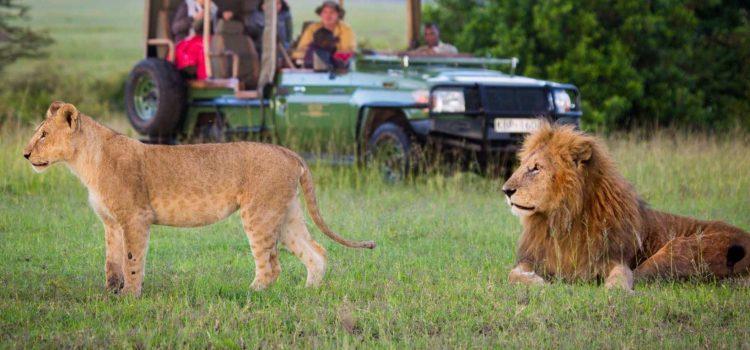 Olare Omotorogi Conservancy - Masai Mara - Cheetah Safaris